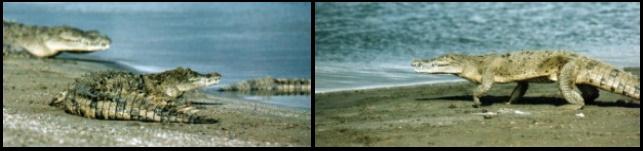 lago enriquillo navegar de kitesurf