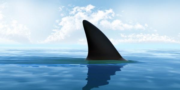 2 un requin sur la plage