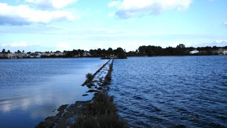 17 de un lado y otro del espigon lago de Alcudia